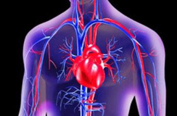 O Que Causa Doença Cardíaca? Parte 3