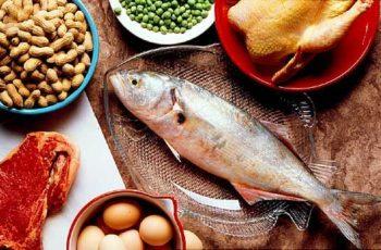 Novas Pesquisas Sobre Proteínas e Microbiota Intestinal
